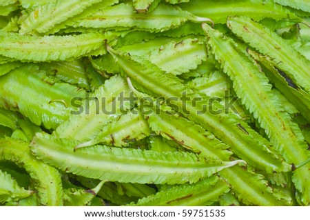green section beans