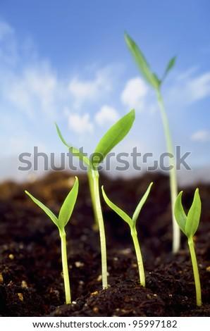 Green seedling - stock photo