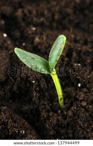 Green seedling growing from soil close-up  - stock photo