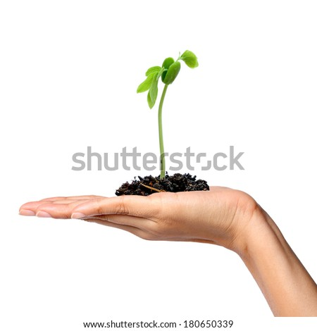 Green seedling growing from soil in female hand isolated on a white background, hope concept - stock photo