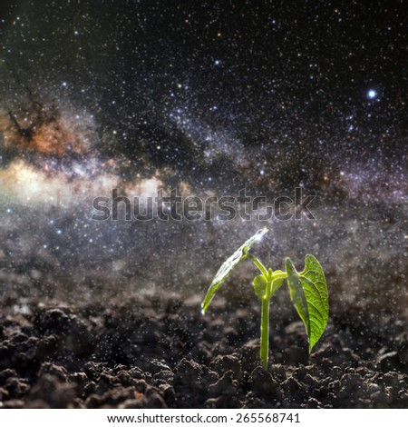 Green seedling growing on the ground in the rain. Elements of this image furnished by NASA - stock photo