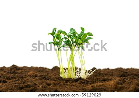 Green seedling illustrating concept of new life - stock photo
