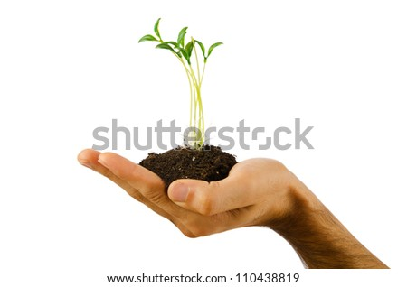 Green seedling in the hand