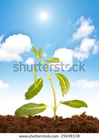 Green seedling isolated on the white background