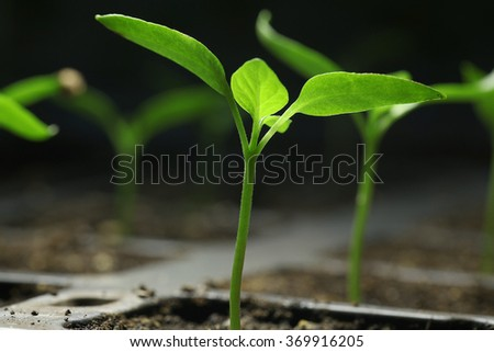 green seedling sprouts - stock photo