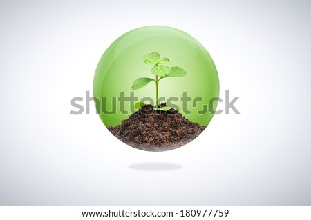 Green seedling with soil inside glossy ball - sustainable development & conservation concept - stock photo