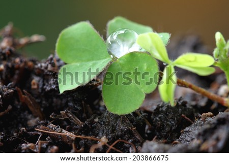 Green Seedlings in a macro.