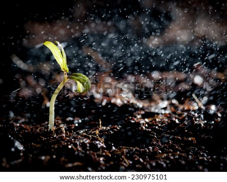 Green seedlings in new life and water - stock photo