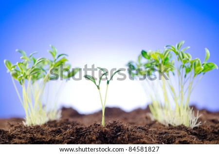 Green seedlings in new life concept - stock photo