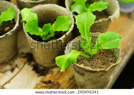 Green seedlings in small brown pots sprouts - stock photo