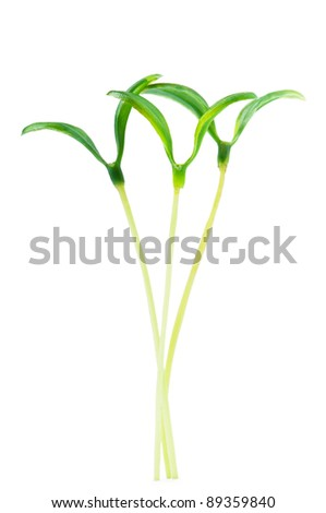 Green seedlings isolated on the white - stock photo