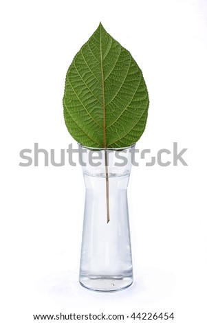 Green sheet ????????????? a tree in a vase with water - stock photo