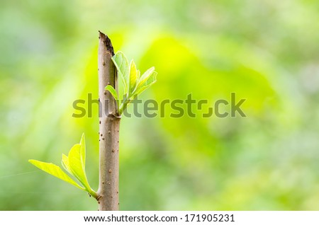 Green shoot - New life is begin concept - stock photo