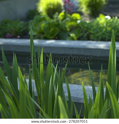 Green shoots in the foreground of a garden - stock photo