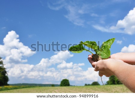 Green shoots in the hands