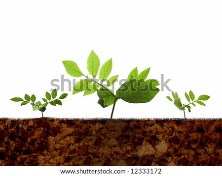 Green shoots & soil