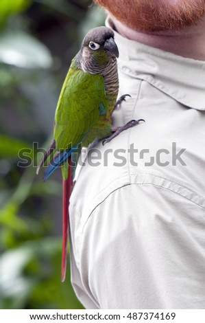 Green shouldered parrot perching on a man's shoulder
