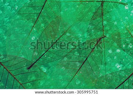 Green skeleton leaves background - stock photo
