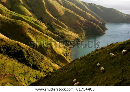 Green slopes of the Marlborough Sounds region of South island of New Zealand