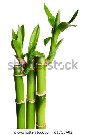 green small bamboo on the white background