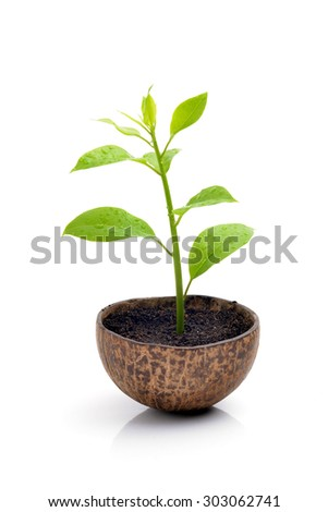 green small tree in ground isolated on white background