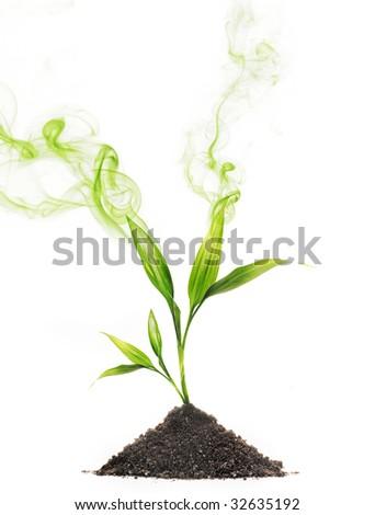 Green smoke around young plant - stock photo