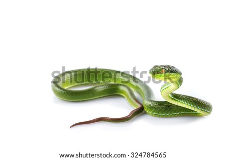 Green snake - stock photo