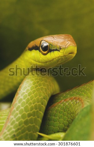 Green snake in the middle of the leaves.