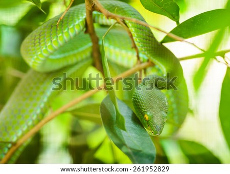 Green snake in tropical forests, Thailand.  - stock photo