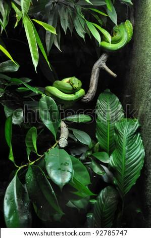 green snake in zoo - stock photo