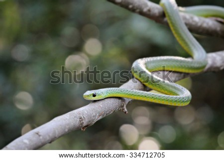 green snake on a tree - stock photo