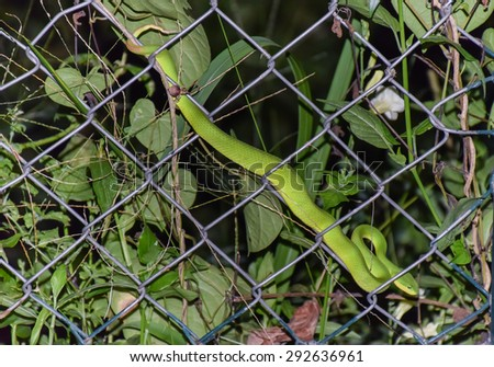 green snake on fence at night - stock photo