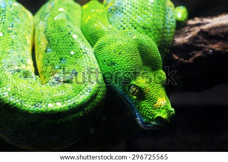 Green snake on the branch - stock photo