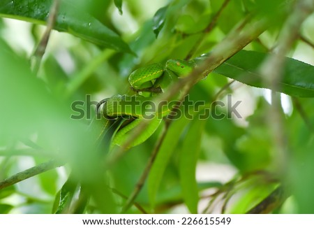 Green snake on the tree - stock photo