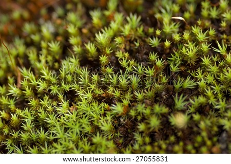 green soft moss in the tundra - stock photo