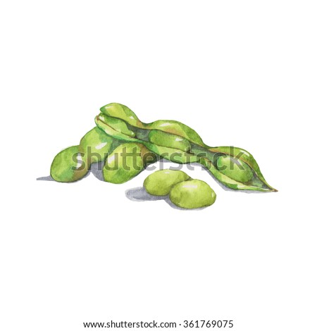 Green Soybean, watercolor painting isolated on white background - stock photo