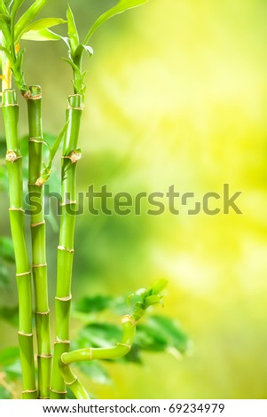 Green Spa - bamboo background