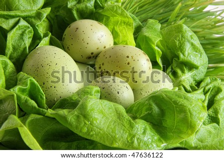 Green speckled easter eggs in lettuce leaves