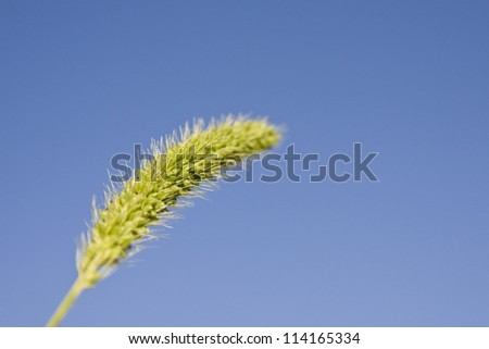 green spike on sky background