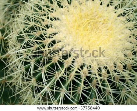 Green spiny cactus - stock photo