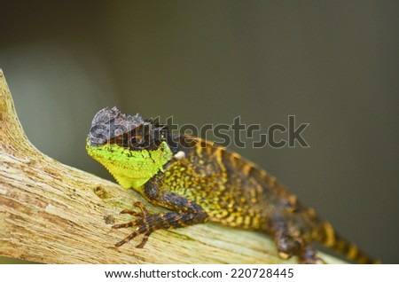 green spiny lizard sitting on the tree