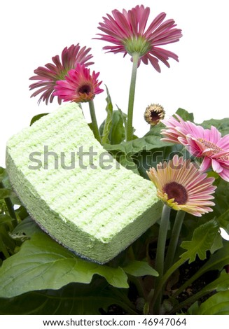 Green sponge sits in a daisy garden representing Spring Cleaning isolated on white.