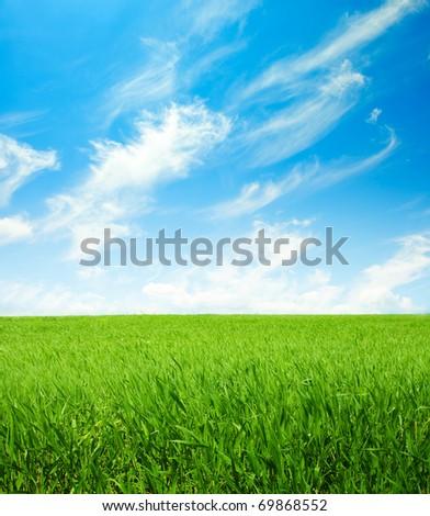 green spring field - stock photo