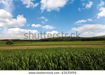 Green spring fields - stock photo
