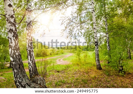 Green spring forest. Beautiful landscape - stock photo