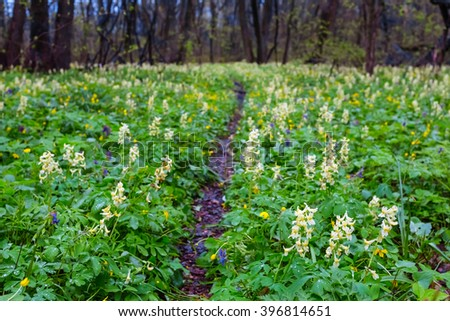 green spring forest glade in a flowers