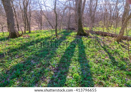 green spring forest in a rays of sun - stock photo