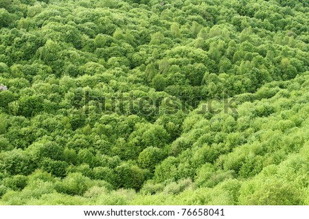 Green spring forest seen from above - stock photo