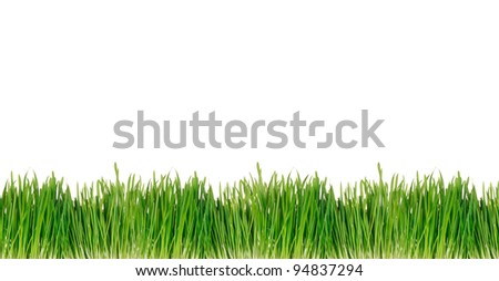 Green spring grass background over white - stock photo