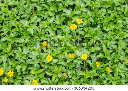 Green spring leafy plant and petite yellow flower - stock photo